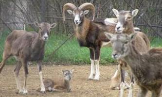 Бродячі собаки загризли 15 мешканців софійського зоопарку