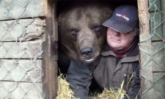 Бурий ведмідь юусо і фінський мачо суло