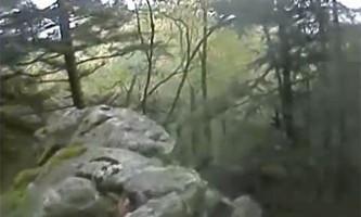 Бурий ведмідь зняв фільм про своє життя в дикій природі