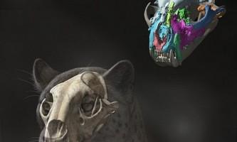 Нову версію еволюційного древа сімейства котячих запропонували вчені