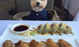 Колишній бродячий пес тепер ходить по найкращим ресторанам