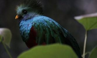 Найкрасивіші птаха планети