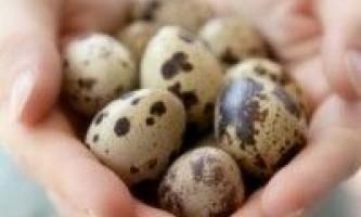 Цілющі властивості перепелиних яєць