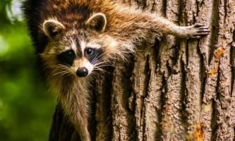 Людина порушив основні тваринні інстинкти, вважають вчені