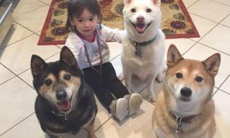 Людина приручав собак двічі