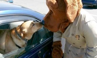 Тести знову довели, що собачий ніс точніше аналізів по виявленню раку