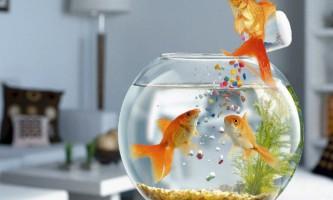 Чим годувати акваріумних рибок?