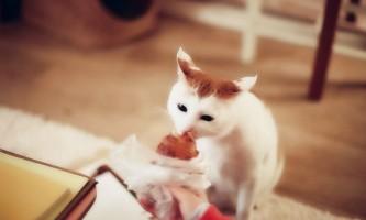 Чим годувати кота при сечокам`яній хворобі