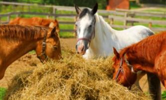 Чим годувати коней?