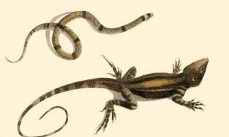 Чим змії відрізняються від ящірок?