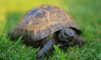 Черепаха блейк - живий свідок першої світової війни потребує нового будинку