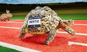 Черепаха-рекордсмен, що потрапила в книгу гиннесса, стала найшвидшою на планеті