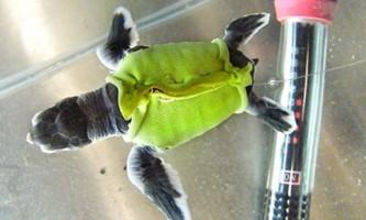 Черепасі пошили костюм з дитячого купальника