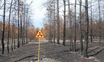 Чорнобильські дерева і листя практично не розкладаються, заявили вчені