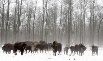 Чорнобильські тварини