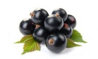 Чорна перлина: кращі сорти чорної смородини