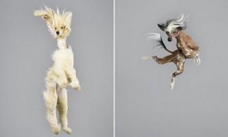 Собаки в польоті - веселий фото-проект від julia christe