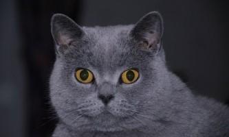 Що робити якщо кішка паскудить, і як відучити кішку гадити