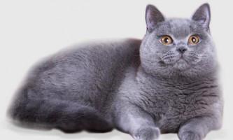 Що робити, якщо кішку вкусив кліщ
