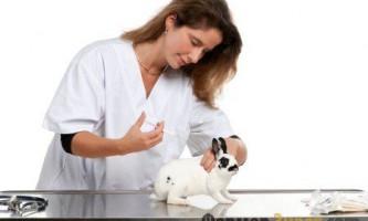 Що робити якщо кролик заразився геморагічної хворобою