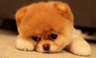 Що робити, якщо щеня або собака скиглять? Як відучити їх від цього?