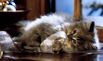 Що робити, якщо сльозяться очі у кошеняти