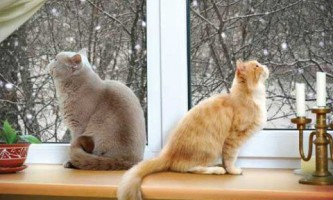 Що робити, якщо ваша кішка просить кота? Поради і засоби