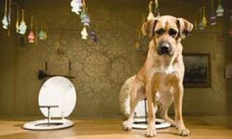 Що робити і як відучити собаку гадити і писати в будинку?