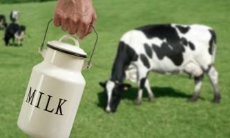 Що відомо любителям молока про годувальниці - корові?
