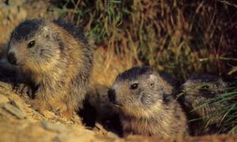 Що нам відомо про сплячці тварин взимку?