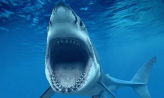 Що нам відомо про акул?