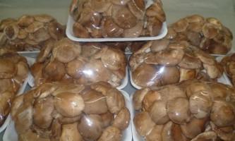 Що потрібно знати про шиітаке і особливості його вирощування