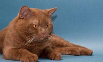 Що потрібно знати про вакцинацію і щеплення кішкам