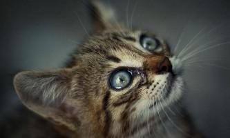 Що з кошеням, якщо він почав трясти вухами