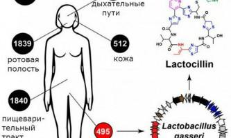 Мікроби в людському тілі є джерелом ліків