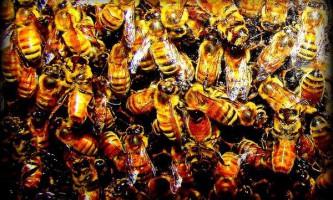 Щоб знайти дорогу до вулика, бджоли орієнтуються по ландшафту
