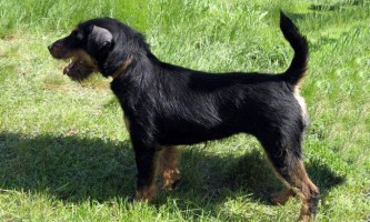 Чупакабра навела жах на мисливського пса, його господаря і російського туриста