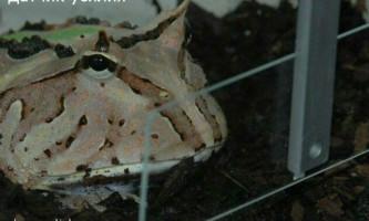 Сила мови жаби здивувала біологів