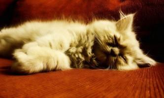 Цистит у кішок - серйозне захворювання, яке вимагає своєчасного лікування