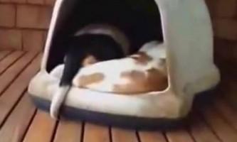 Скільки собак спить в цій будці?