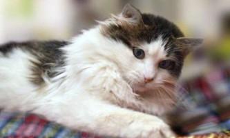 Cтерілізація кішок - наслідки і зміни в поведінці тварини