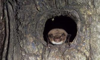 Cверхбистрие м`язи кажанів дозволяють тримати видобуток в `` поле зору ``