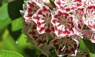 Квіти, які можуть нарведіть вашому здоров`ю