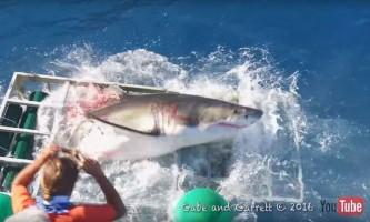 Дайвер тільки дивом врятувався від щелеп білої акули