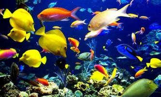 Чи справді риби мовчать?
