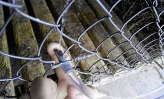Робимо поїлки для кроликів своїми руками