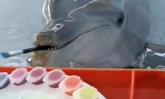 Дельфін на прізвисько чики вміє малювати картини