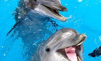 Дельфіни-геї сприяють виживання виду