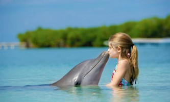 Дельфіни - ссавці, схожі на людей