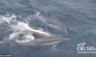 Дельфіни на своїх спинах підтримали на плаву паралізовану самку